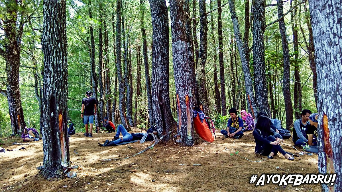 Hutan Pinus ini ternyata bukan di Malino, tapi di Barru – Barru.Org